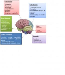 funçãocérebro